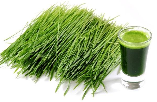 zielony jęczmień bio food