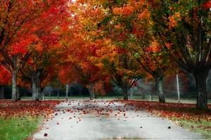 trees-233466_640